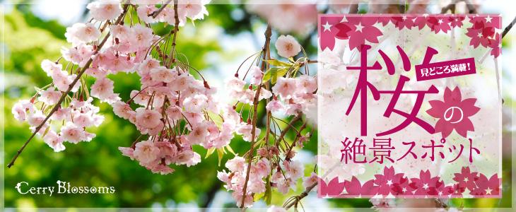 桜の絶景スポット