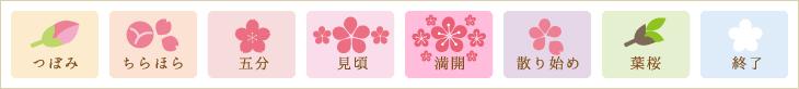 北斗市の桜開花状況アイコン説明