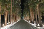 トラピスト修道院並木道 ライトアップ