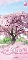 北斗桜めぐり